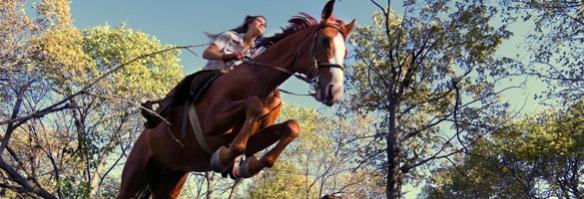 Vermont-horse